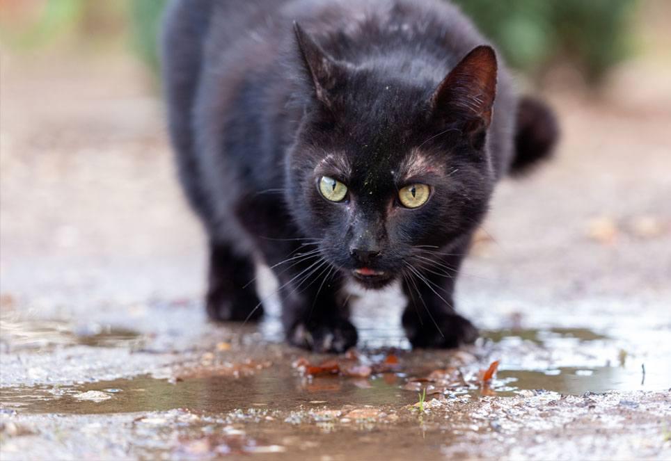 strassenkatze-trinkt-wasser