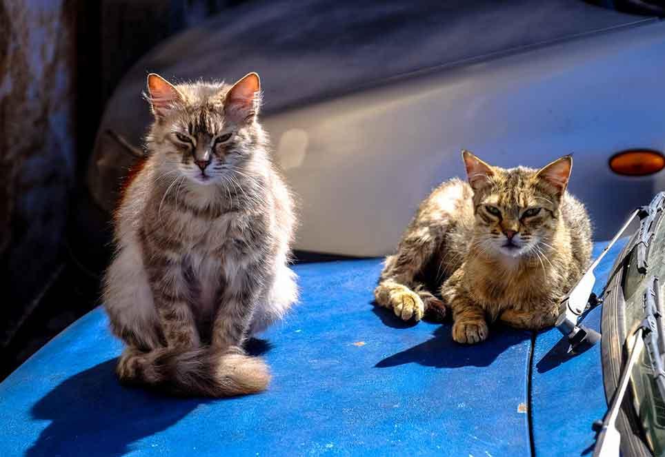 streuner-straßenkatzen