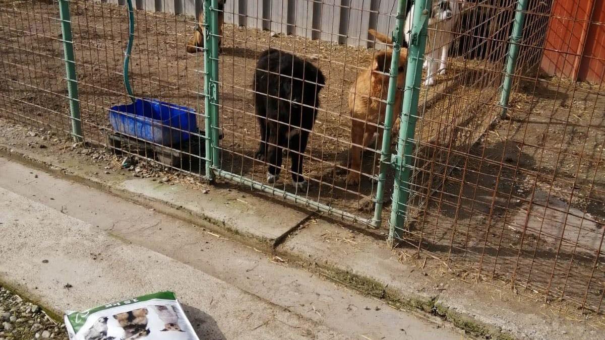 Freundeskreis der Straßenhunde in Campulung eV_SM2020_RO10