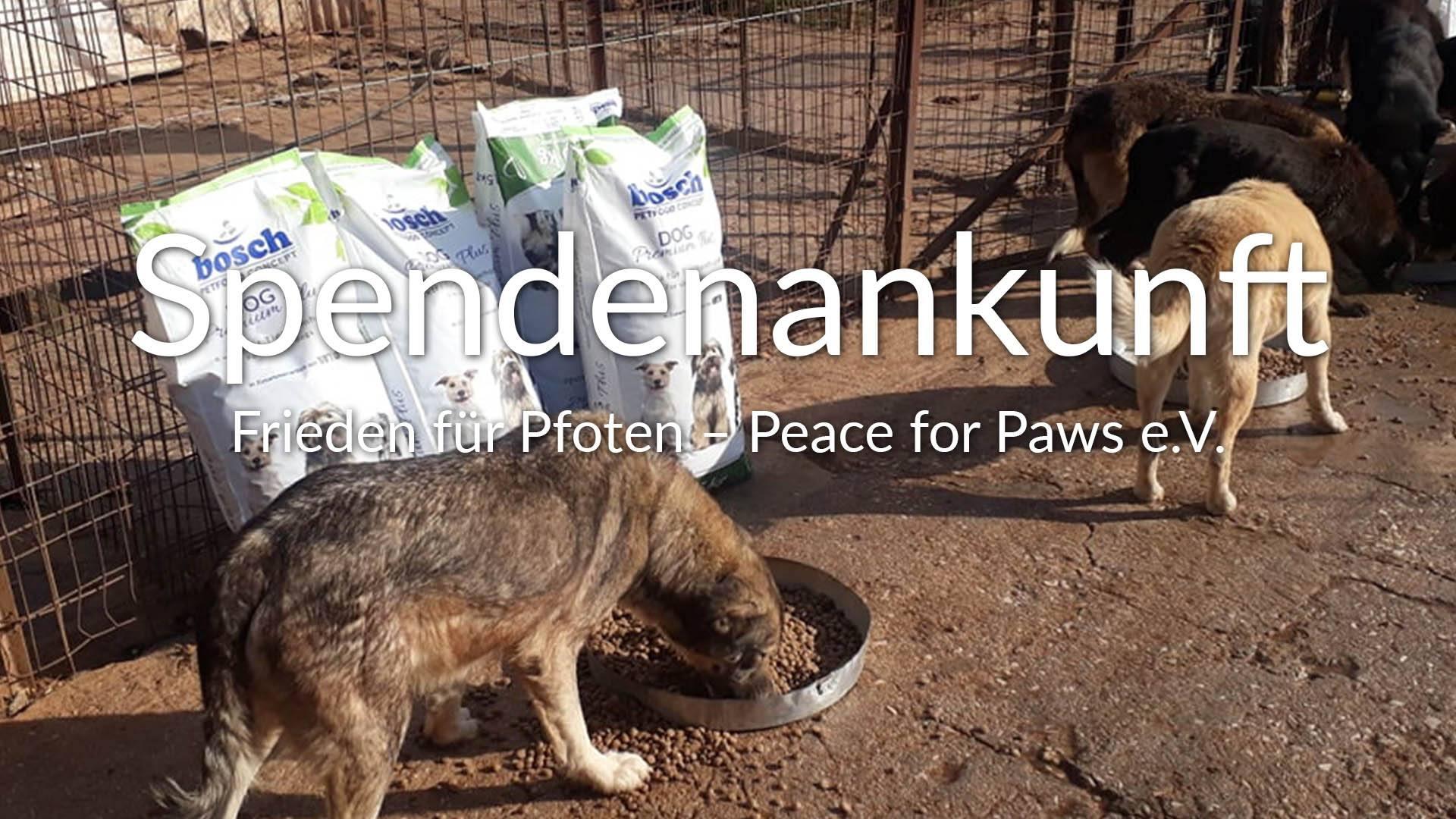 Frieden für Pfoten – Peace for Paws eV_Thumbnail
