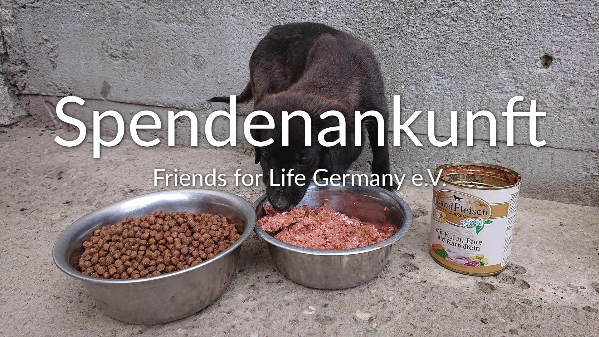 Friends for Life Germany eV_thumbnail