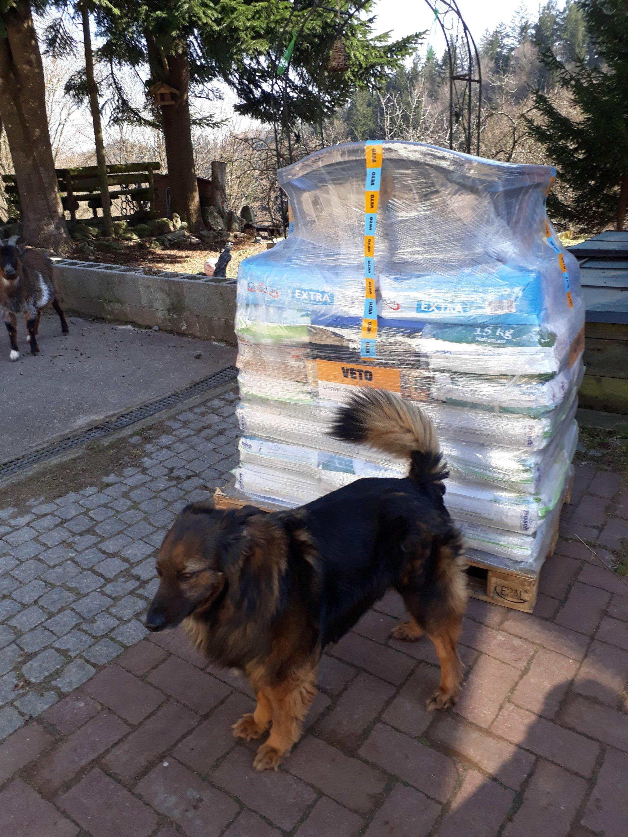 Tierschutzhunde Russland eV_WL_DE2