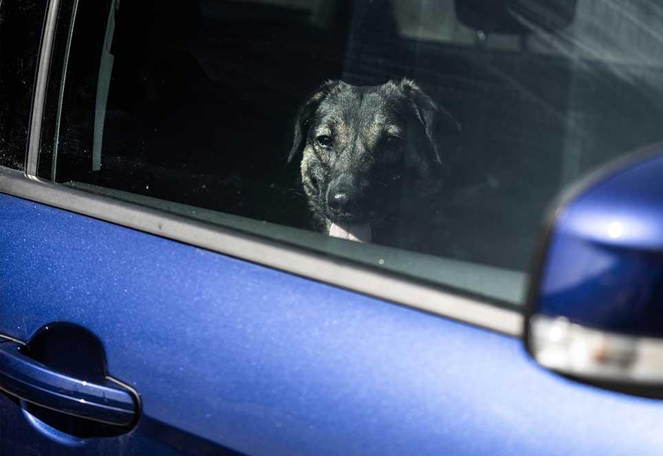 hund-hitzefalle-auto