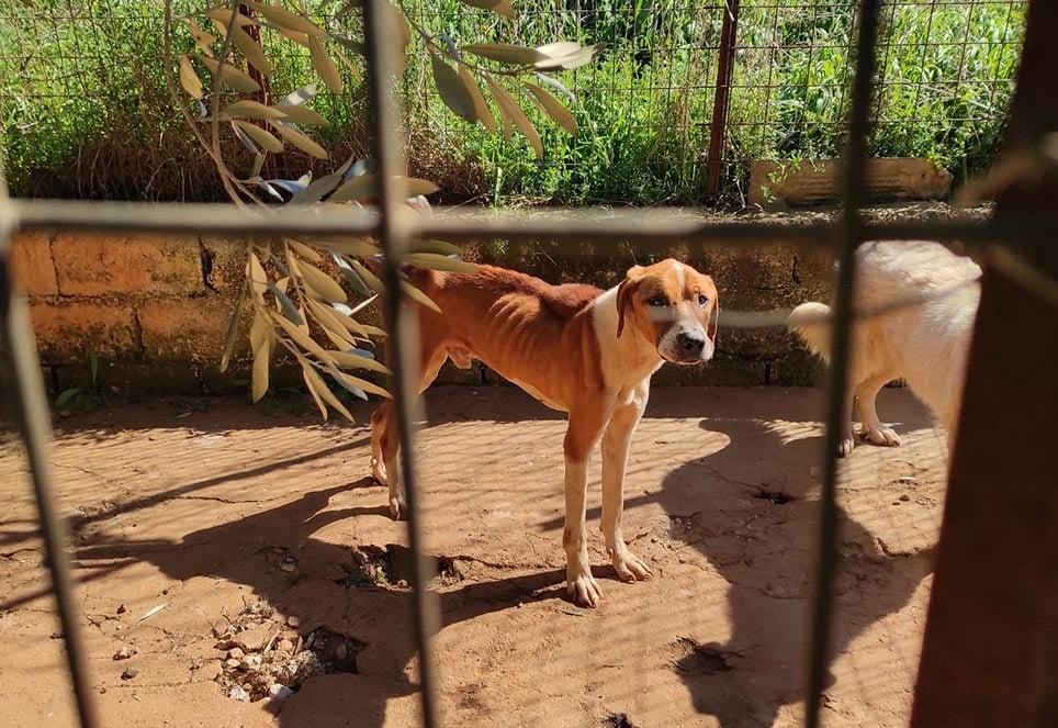 hund-im-shelter-in-griechenland