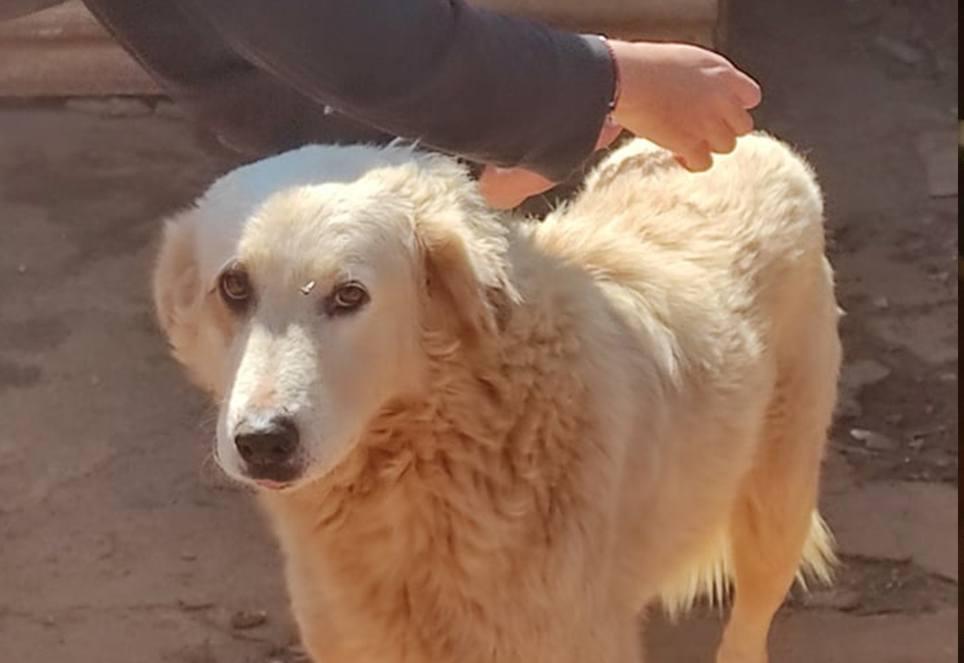 hund-wird-geimpft-in-griechenland