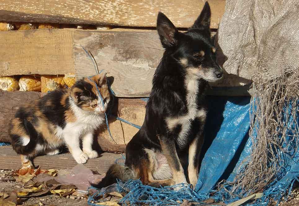 katze-hund-straßentiere-europa