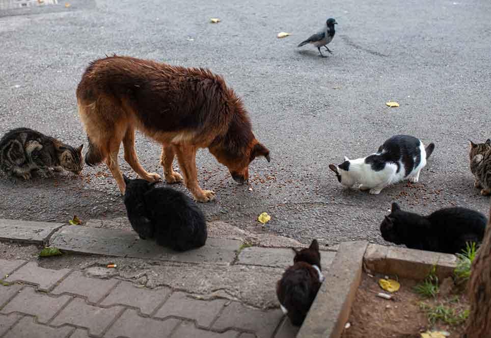 katzen-hund-straßentiere