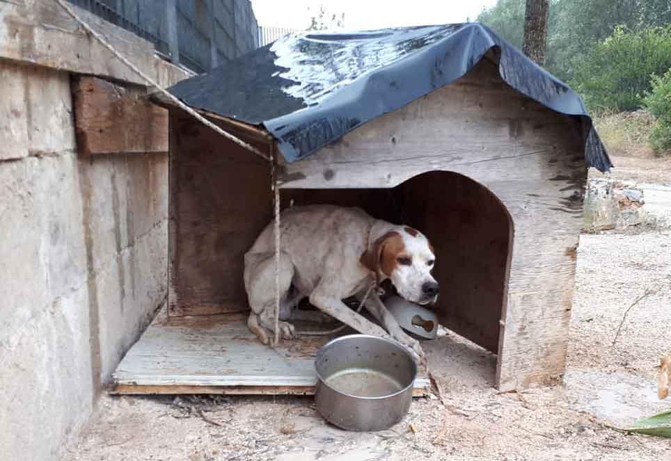 leben-fuer-streuner-kettenhund-italien