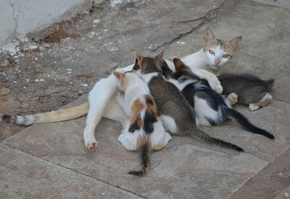 straßenkatze-kitten-europa