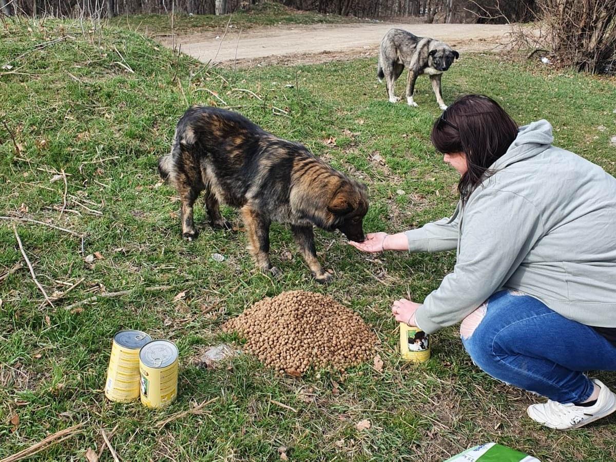 Homeless Dogs Romania eV_WL_RO5