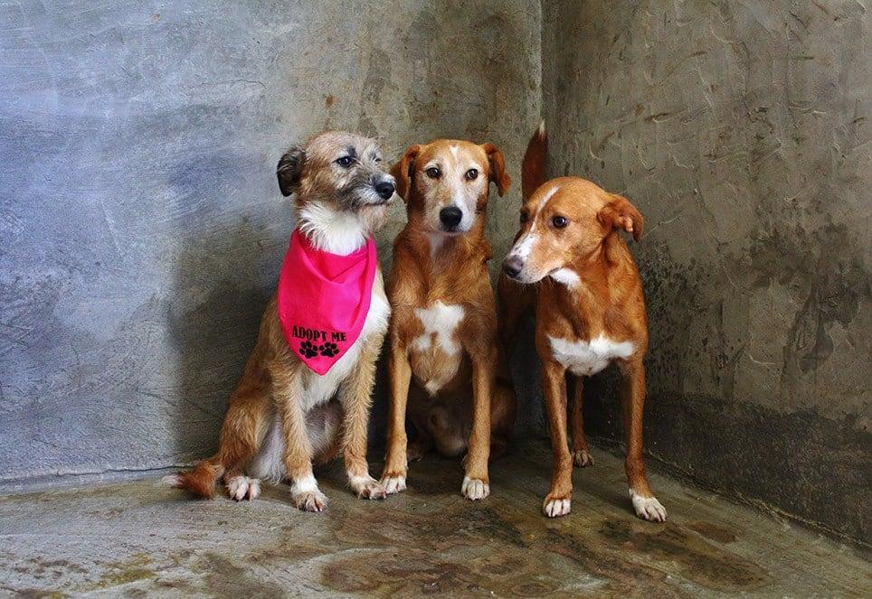 Das Bild zeigt drei Hunde in einem Tierheim in Portugal.