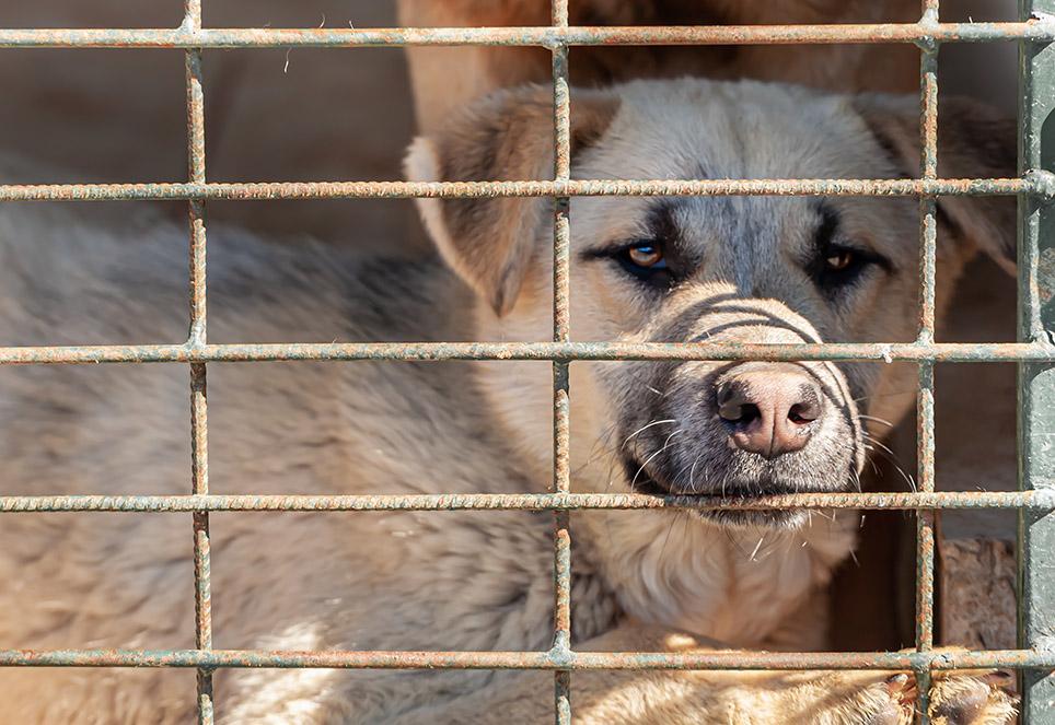 hund-in-toetungsstation-rumänien