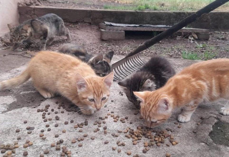 katzenhilfe-schmelz-kitten