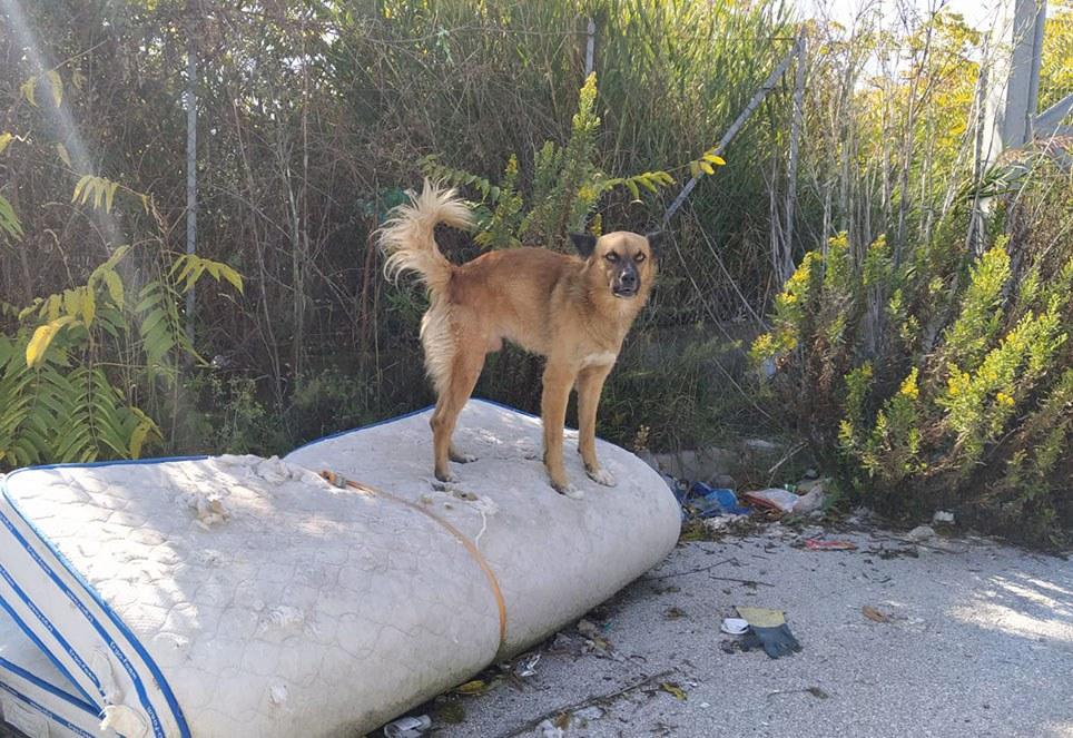 strassenhund-animalrespect