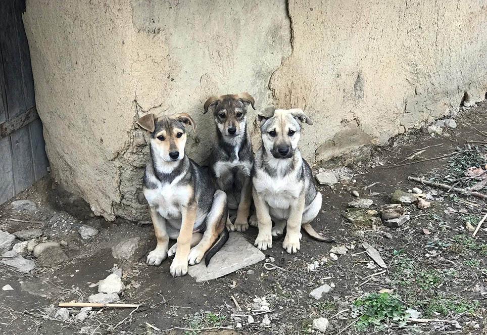 strassenhunde-geschwister-rumänien