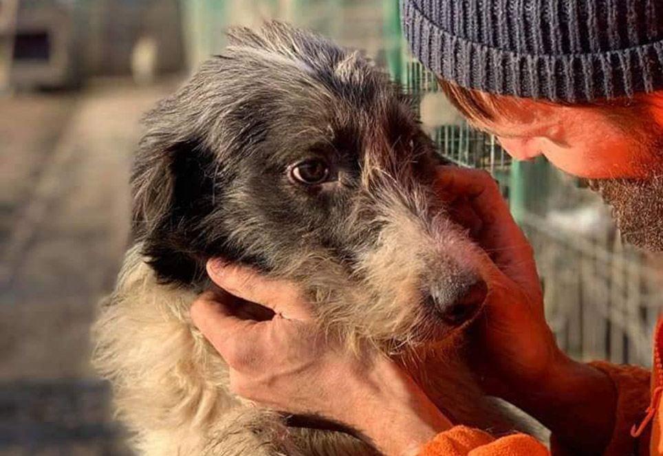 Rumaenischer-Tierarzt-mit-grauem-hund