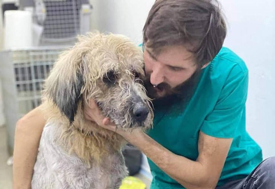 Tierarzt-in-Rumänien-mit-grossem-hund