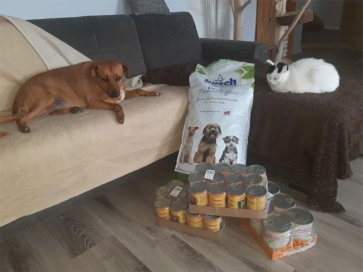 Tierhilfe-Chance-auf-Glück-und-Geborgenheit-DE-WL