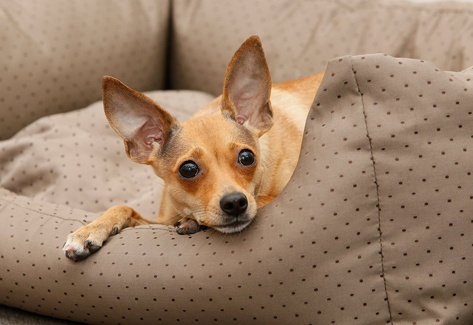 buerohunde-bleiben-im-koerbchen