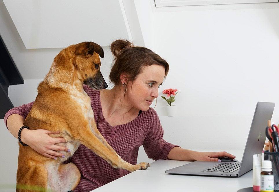Das Bild zeigt einen braunen Hund, der bei seiner Halterin auf dem Schoß sitzt. Beide befinden sich in einem Büro.