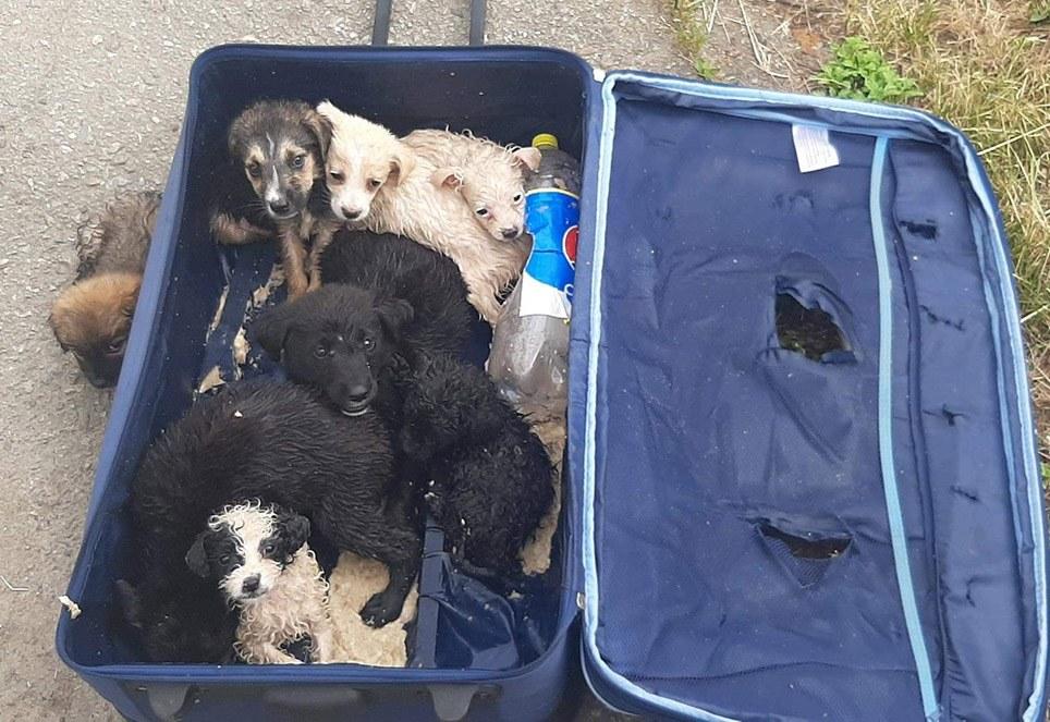 hunde-im-koffer-rumaenien