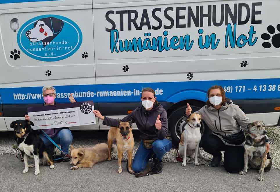 kastrationen-tierschutzverein-strassenhunde-rumaenien-in-not-ev