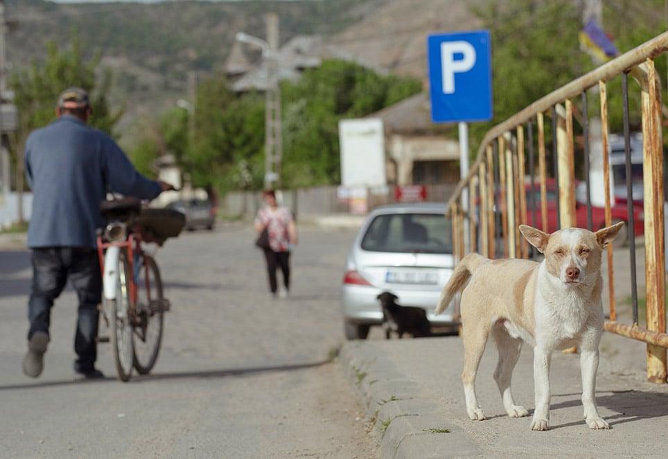 strassenhund-rumaenien