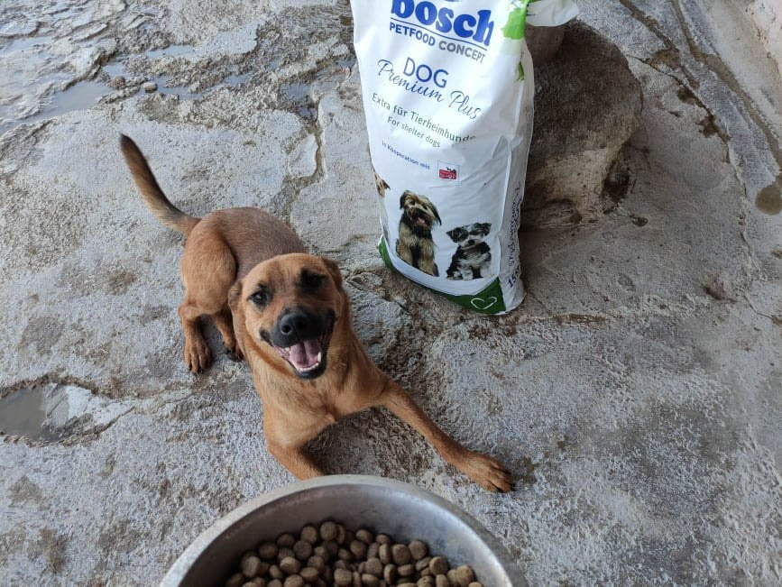 pro Hund andaluz eV_FfdV_ES10