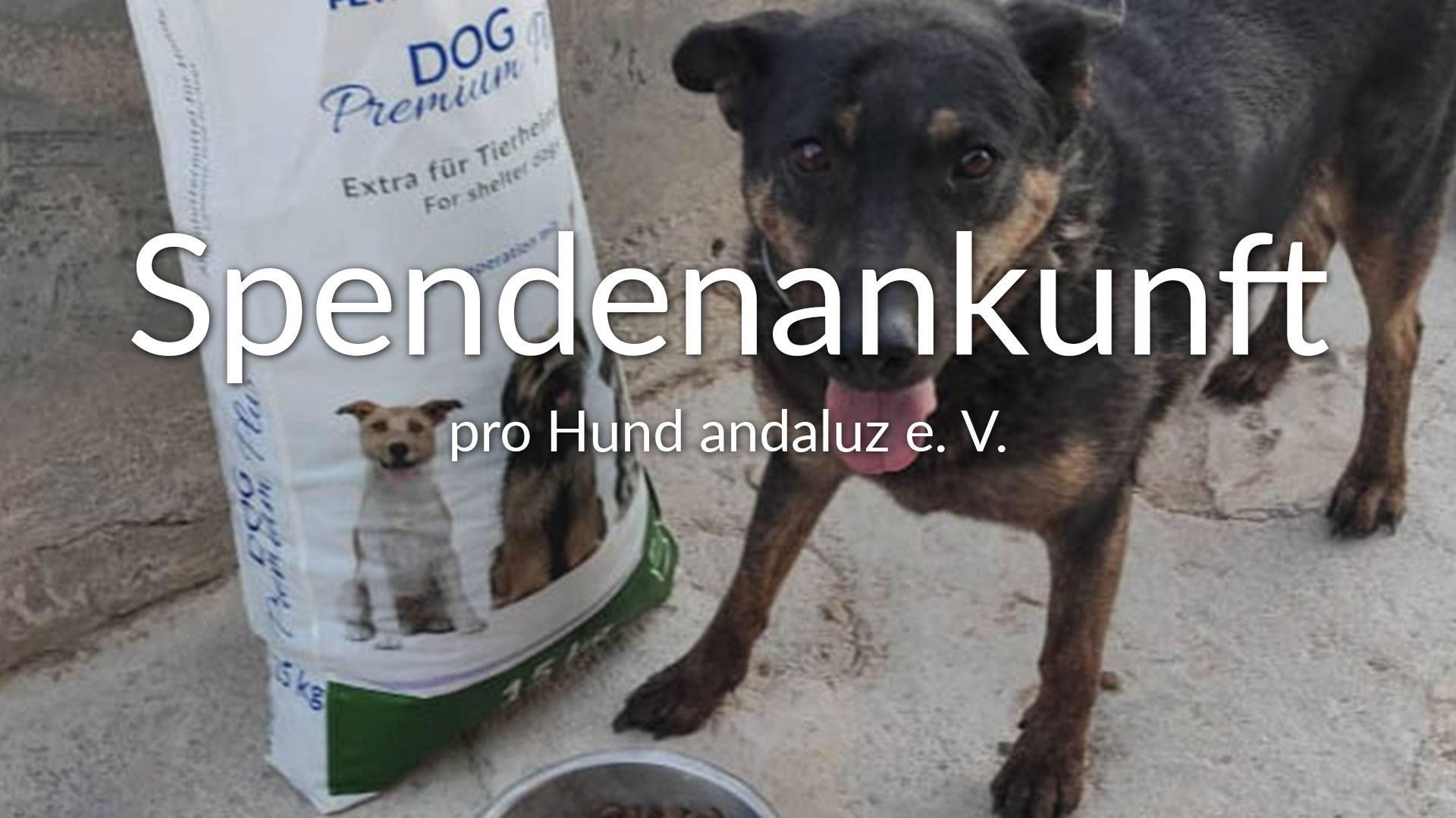 pro Hund andaluz eV_FfdV_ES_Thumbnail