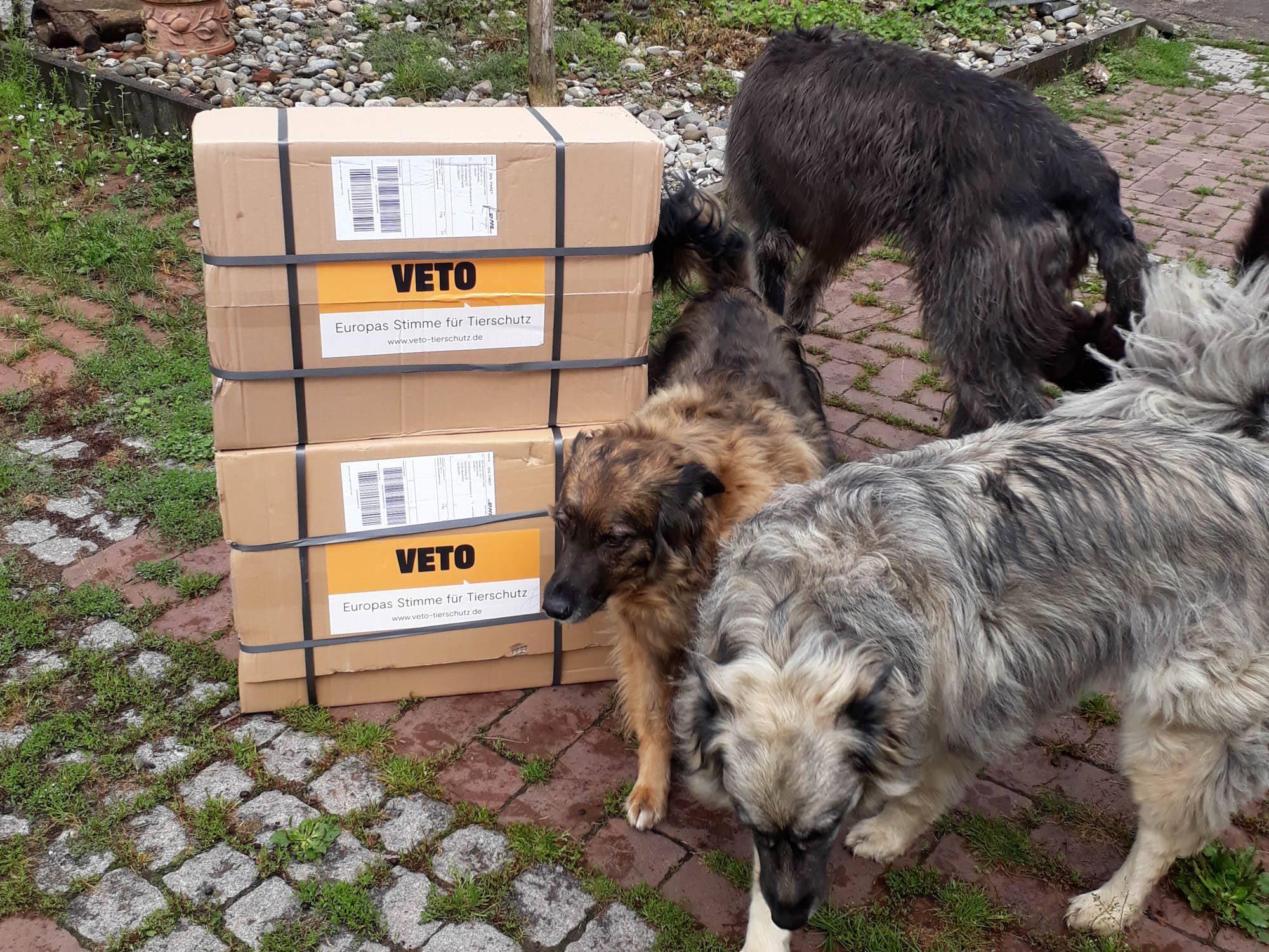 Tierschutzhunde Russland eV_WL_DE44