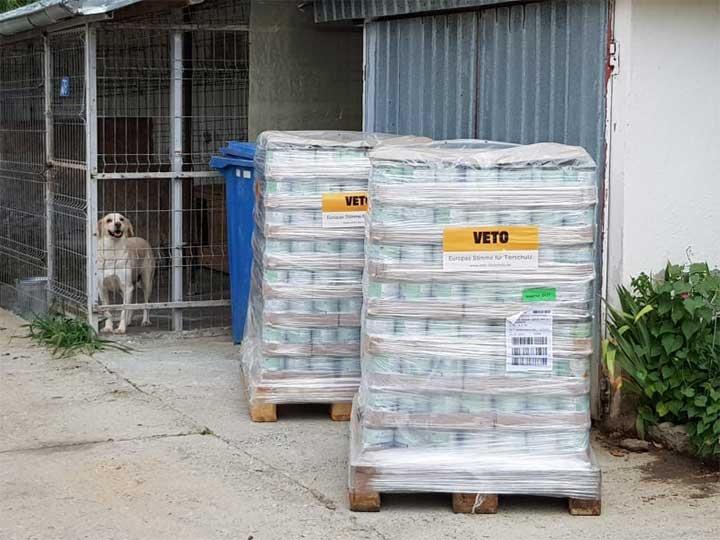 Tierschutzverein-Pfote-sucht-Glück-e.V.-ThdMMai2020-RO-8