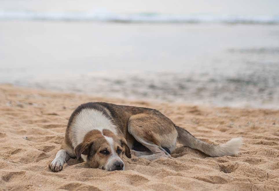 streuner-hund-strand
