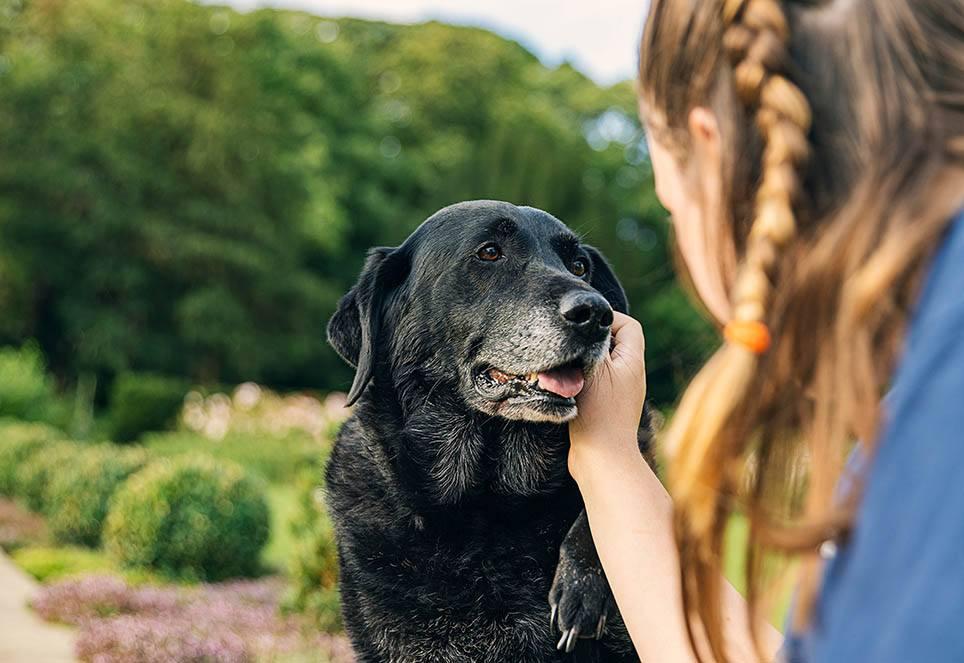 Das Bild zeigt einen schwarzen, älteren Hund mit grauer Schnauze. Er wird von einer jungen Frau gestreichelt. Der alte Hund genießt die Berührung.