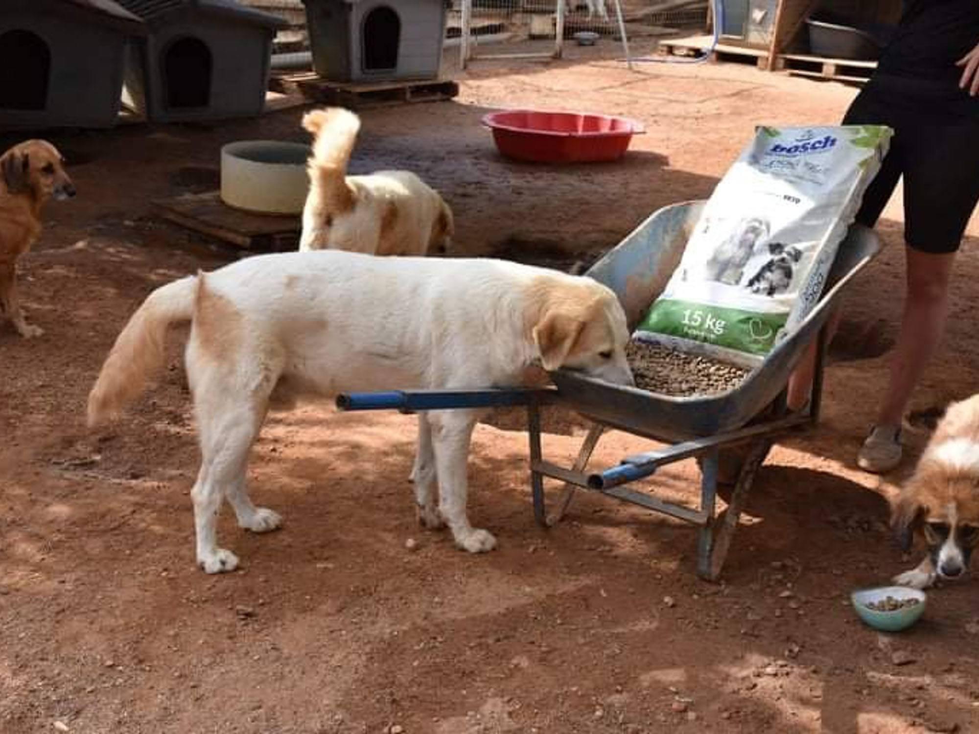 Verein für hilfebedürftige Tiere_SfS21_GR1