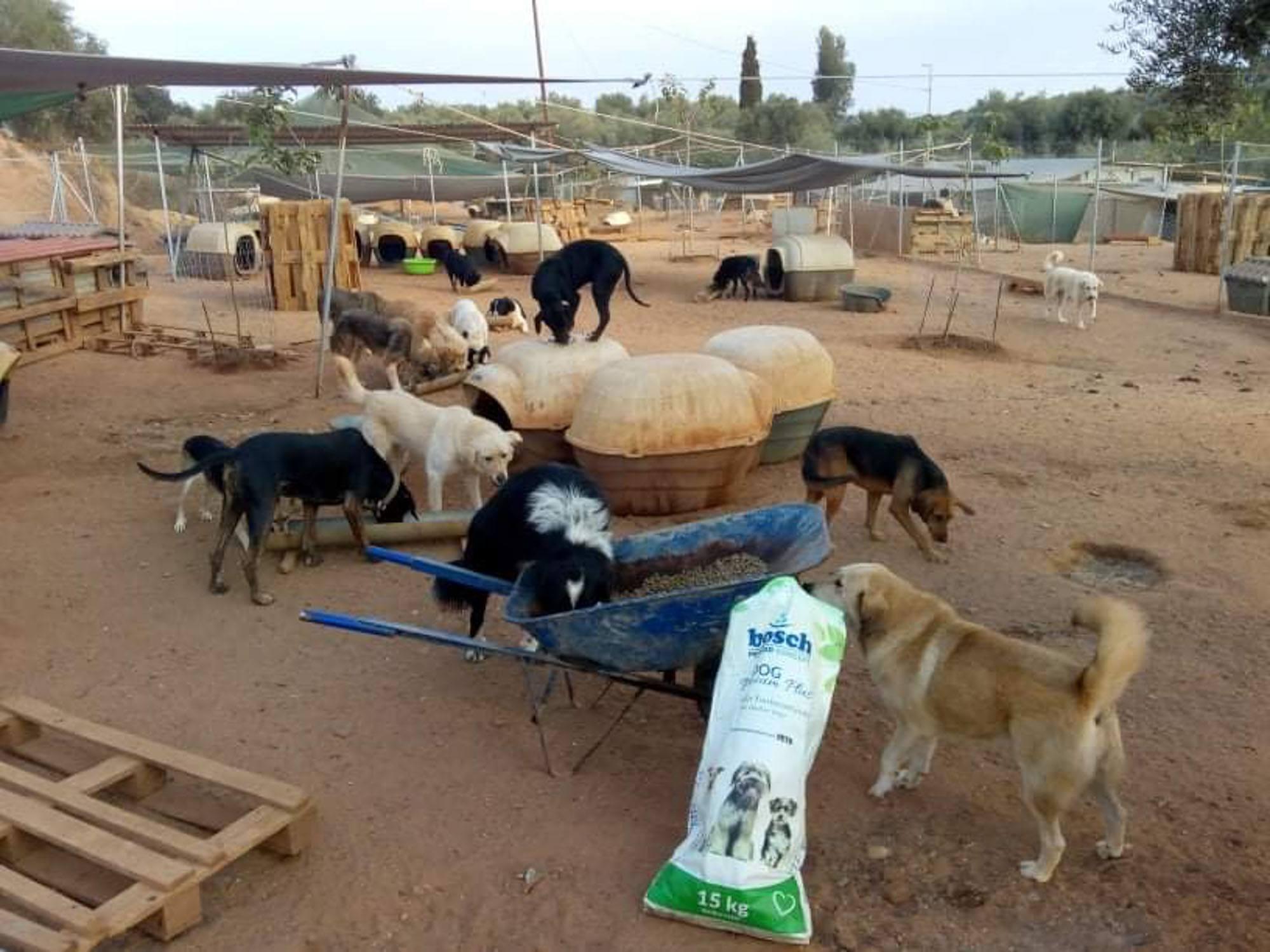 Verein für hilfebedürftige Tiere_SfS21_GR2